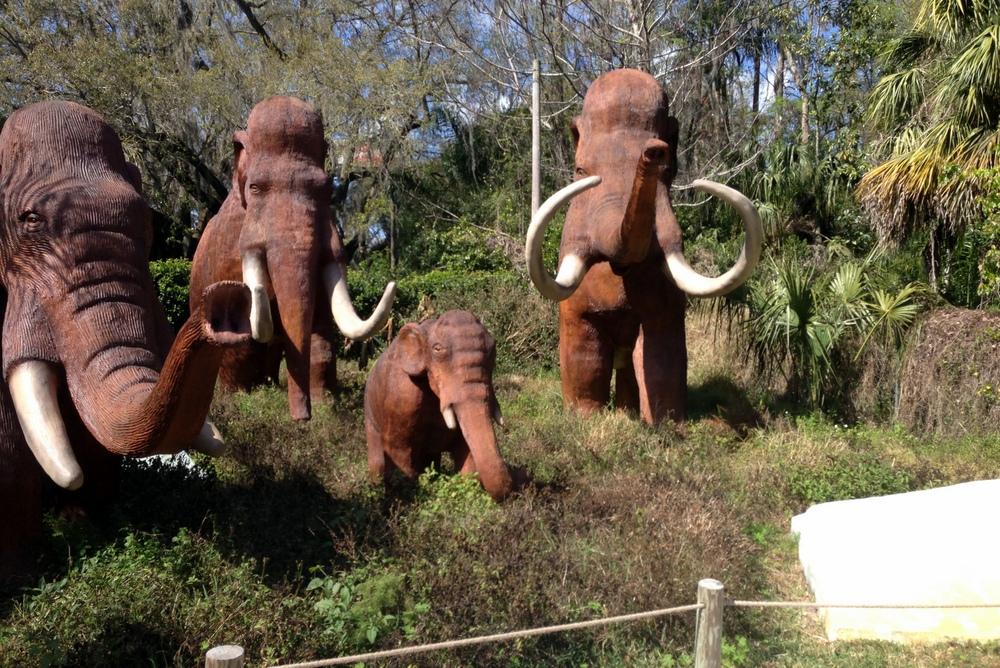 Dinosaur World -- Woolly Mammoths